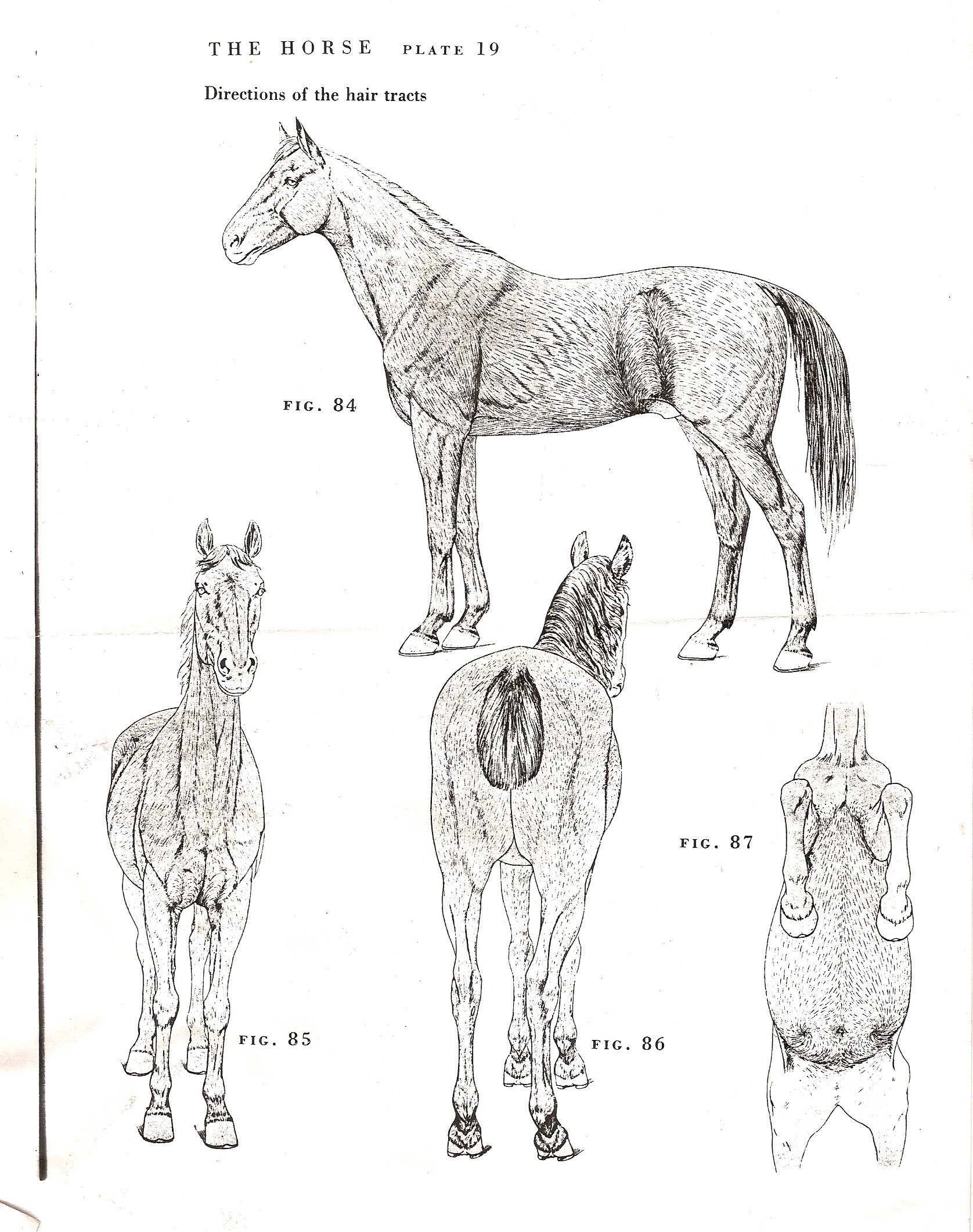 Hair growth chart | Shoestring Stable