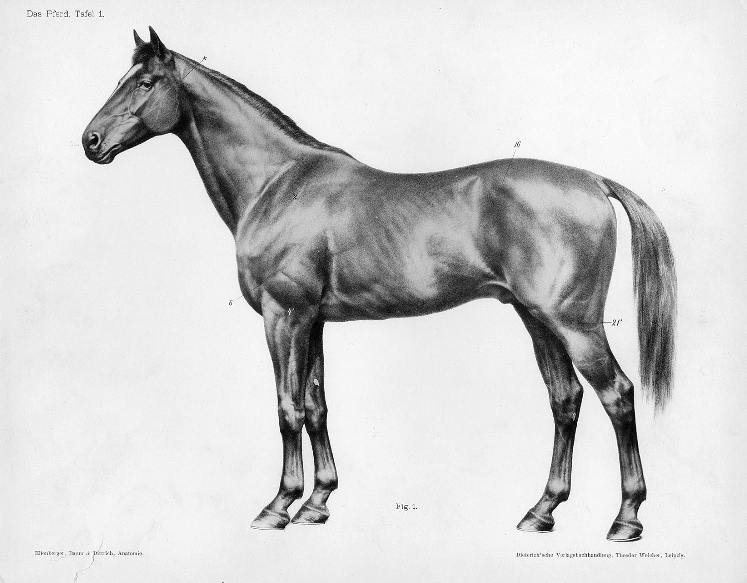 George Stubbs The Anatomy Of The Horse