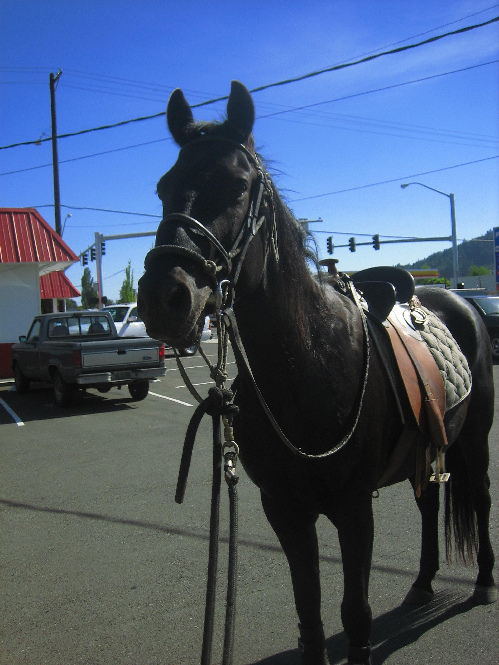 Dairy Queen Horse