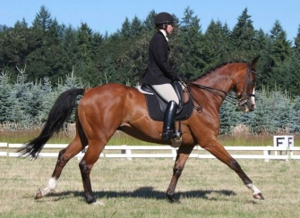 Ducky - red bay OTTB eventer