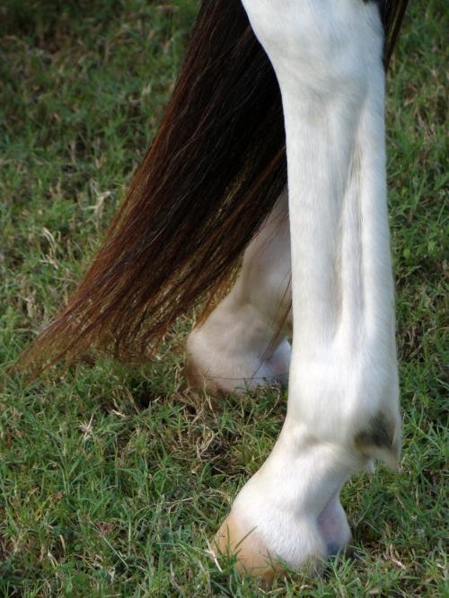 lower leg ref