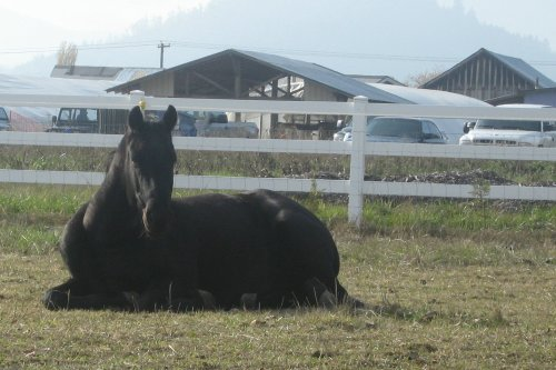 napping pony