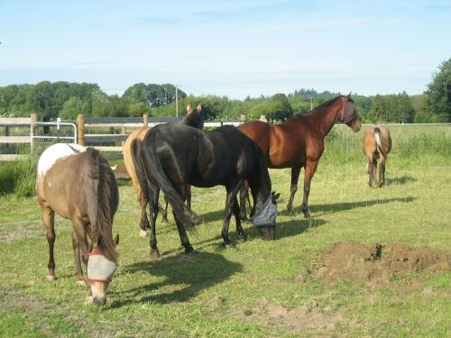 Out with his herd, summer 2008