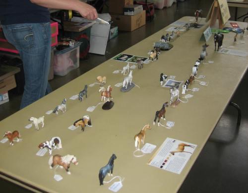 judging - nwe 2012 cm-ar mini pony class