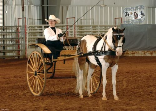 Champion pony Smokin' Double Dutch will be there!