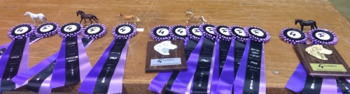 My performance horses with their winnings
