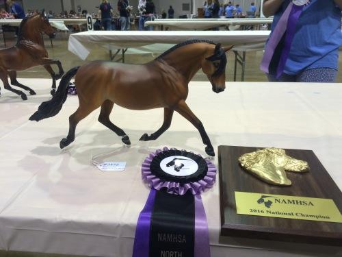 Mackenzie Purdy's beautiful Catarina winning Champion Lusitano/Andalusian.